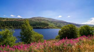 Lake Mymbyr, Snowdonia, Wales, with pink flowers in the foreground