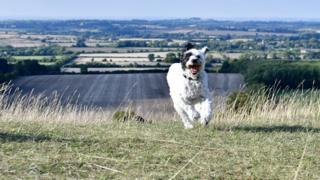 Dog running through grass with Uffington in the background
