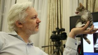 Wikileaks founder Julian Assange holds a pet kitten