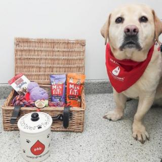 Stumpy-the-record-breaking-blood-donor-dog-with-his-hamper-of-treats-as-a-retirement-award.