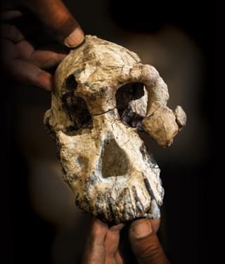 الجمجمة عثر عليها في عفار بأثيوبيا
