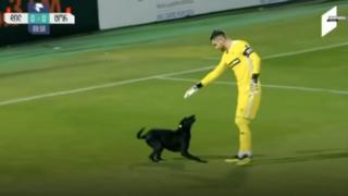 Пес-футболист сорвал матч в Грузии
