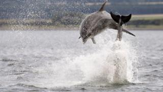 The dolphins at Chanonry Point, Fortrose never fail to impress, says Dawn Westwood.