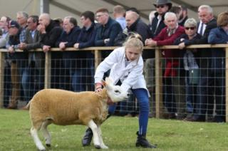 Young girl pulling sheep