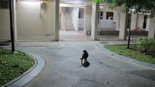 The cat guardians of Singapore