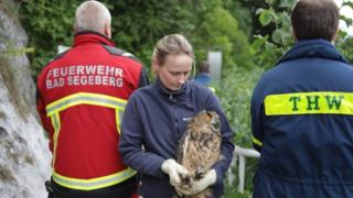 owl rescue operation