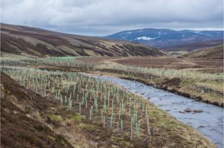 Tree planting along the upper reaches of the River Gairn, Scotland