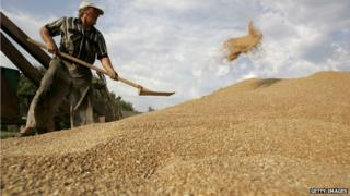 A Russian man shovels grain at a farm