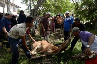 Umat Islam di provinsi Narathiwat, Thailand Selatan bersiap memotong sapi kurban.