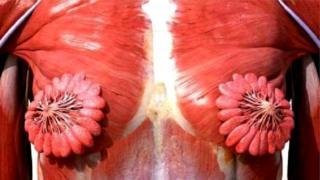 स्त्रियांच्या वक्षातल्या दूधाच्या नलिकांचा (मिल्क डक्ट) फोटो जगभरात व्हायरल
