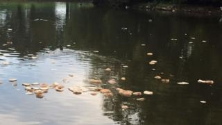 Bread dumped in Sandall Park, Doncaster