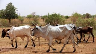 famine, sahel, populations, déplacement