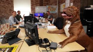 많은 회사, 특히 기술 산업과 관련된 회사들에서 개, 고양이와 같은 반려동물을 환영한다