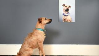 Retrato de perro con perro mirándolo.