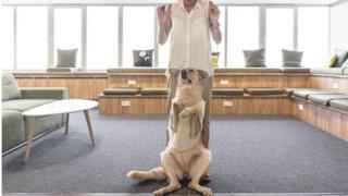 نیکا سگ ولگردی بود که زخمی در خیابان پیدا شد. پس از شش ماه حال او خوب شد و اکنون حتی میتواند برقصد