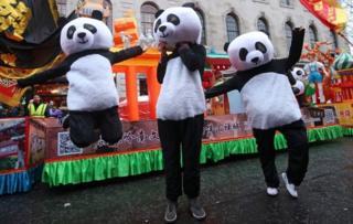 Panda performers