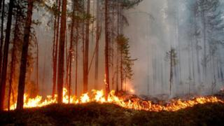 Fire burns in Karbole, Sweden, on July 15, 2018.