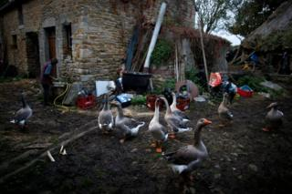 patke na farmi