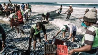 Netters try to catch sardines at the Amanzimtoti beach, south of Durban on July 3, 2019. the sardine run along South Africa's East Coast is an annual event attracting thousands of locals and tourists. Each year massive shoals of sardines stretching hundreds of miles draw thousands of sharks, dolphins and gannets hovering above the fish. Masses of fishermen, locals line the shores to watch, catch and some sell them.