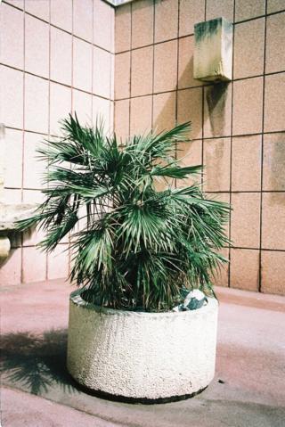 Plant in Marseille