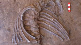 دندهها و بخش بالا تنه اسکلت جدید کشف شده در غار شانهدر