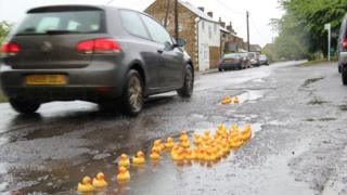 Ducks in potholes