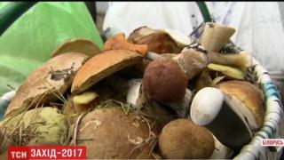 Mushrooms gathered in Pratasevichy village, Belarus