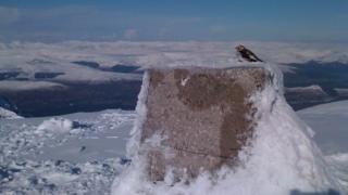 A bird on a snowy cairn on Ben Nevis