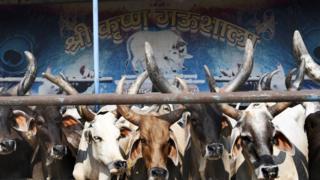 ভারতে সরকারী অনুদানে গড়ে উঠেছে অনেক গোশালা