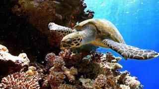 تعرف على العالم الخفي تحت سطح محيطاتنا