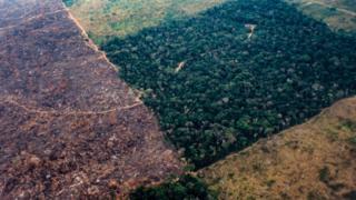 2003年航拍圖展示了巴西原始森林遭砍伐,森林面積迅速減少的狀況