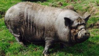 Easterleigh Animal Sanctuary