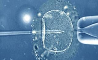 一颗精子通过微型针管注入人类卵细胞