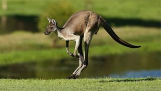 Dadka Australia ayaa loo digay inay sawir ay la galaan xayawaankani.
