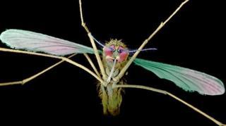 말라리아는 반복적 감염성 때문에 전 세계적으로 치유가 어렵다