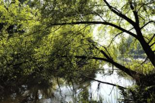 Reflections of trees in a river