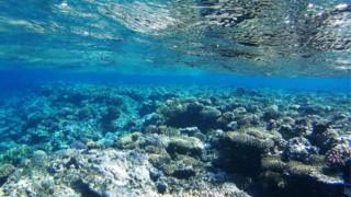 O fundo do mar na Papua Nova Guiné