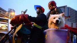 用摩托車春運移動的民眾帶上寵物狗返鄉。