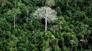 Tree-tops in the Amazon basin in Brazil