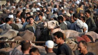 An extremely busy cattle market with hundreds of people herding and examining animals in Egypt, ahead of the holiday