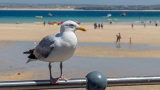 галеб на плажи