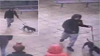 dog  doggie  dogs CCTV images of the man and dog