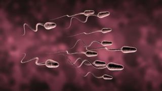 Спермалар