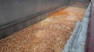 """يتم التخلص من البيض الملوث بالمبيد الحشري """"فيبرونيل"""""""