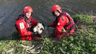Fire fighters rescue sheep