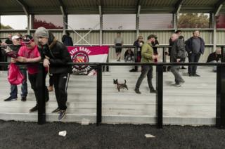 A small dog on the terraces