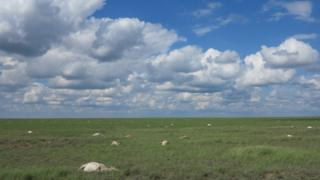 Saigas died in large numbers across the Betpak-Dala region of Kazakhstan