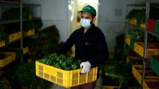 A worker carries a crate of fresh peppers at Emirates Bio Farm