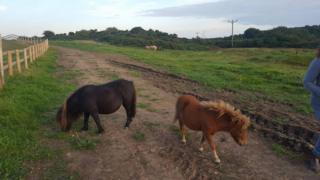 Horses grazing on damaged land