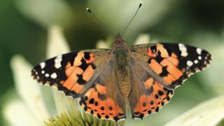 Good nature news Butterfly